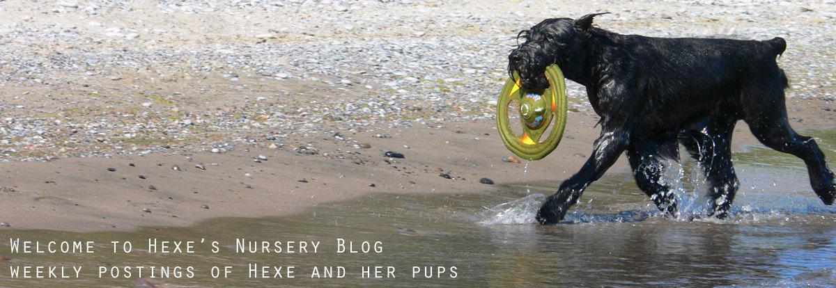 Hexe Pups