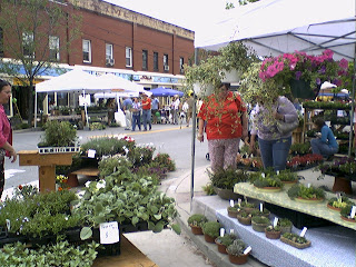 Image of herbs for sale at The Whole Bloomin Thing Waynesville, NC.