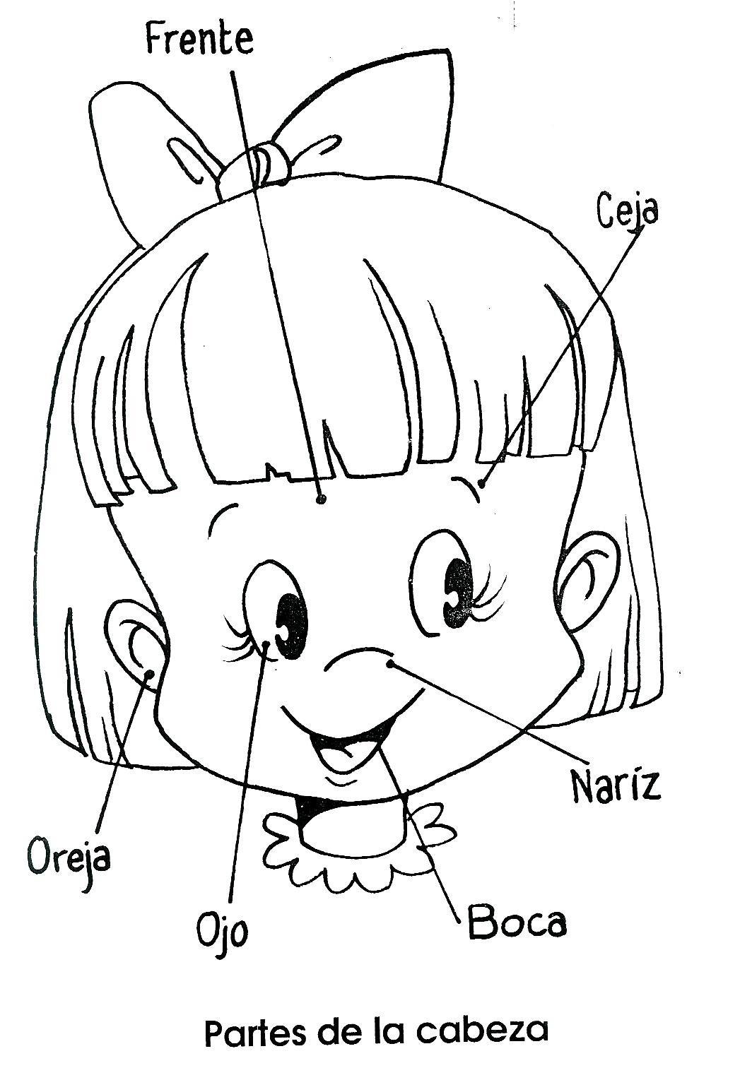 Partes de la cara para dibujar - Imagui