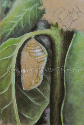 Progress of Monarch chrysalis painting in pastel by Canadian Artist Colette Theriault