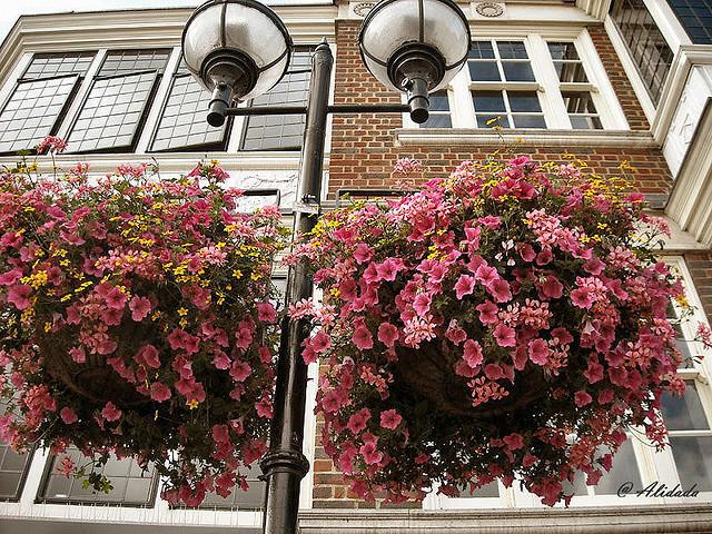Il giardino sfumato fiori da appendere for Fiori grassi da giardino