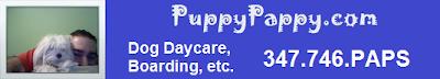 dog daycare NYC