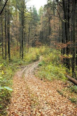 zagubiona droga na Wzgórzach Strzelińskich