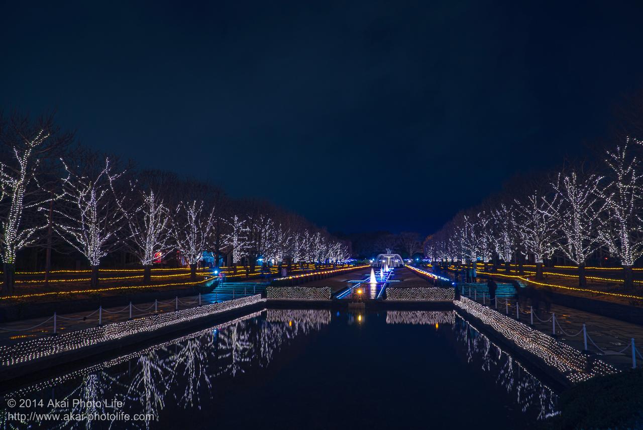 国営昭和記念公園のイルミネーション(カーナル 水路)
