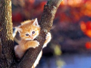 Foto Kucing Lucu Imut dan Menggemaskan 05