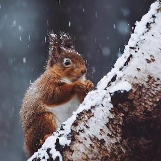 Ecureuil sous la neige Noel Weheartit Inspiration Décembre Lifestyle Mademoiselle latinne