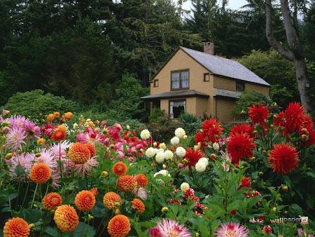 taman penuh bunga