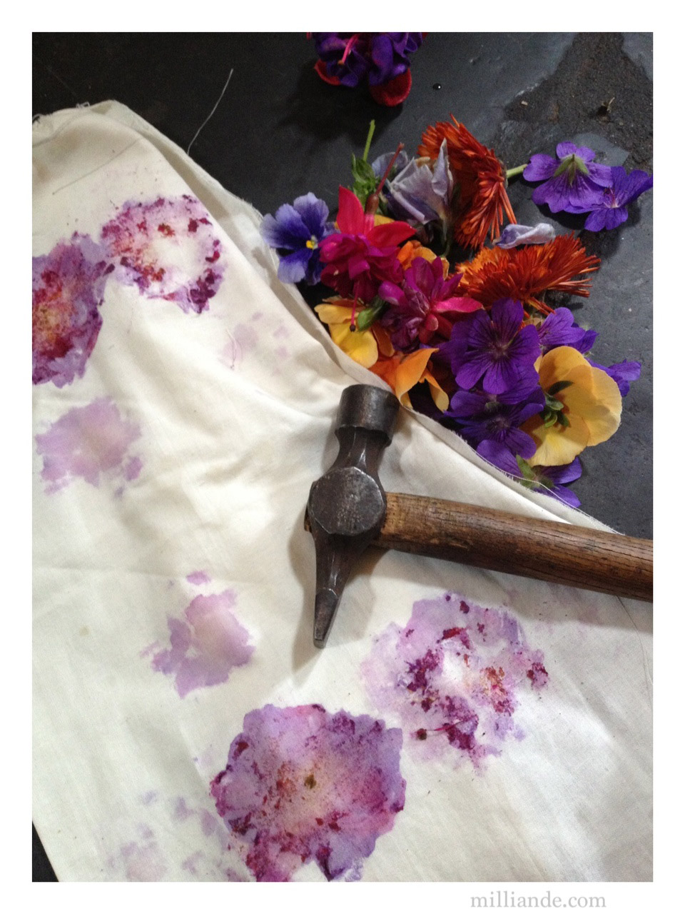 Dyeing Fabric With Flowers Flower Pounding Eco Dyeing