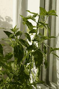 Emprendamos como iniciar un negocio de venta de plantas for Plan de negocios de un vivero de plantas