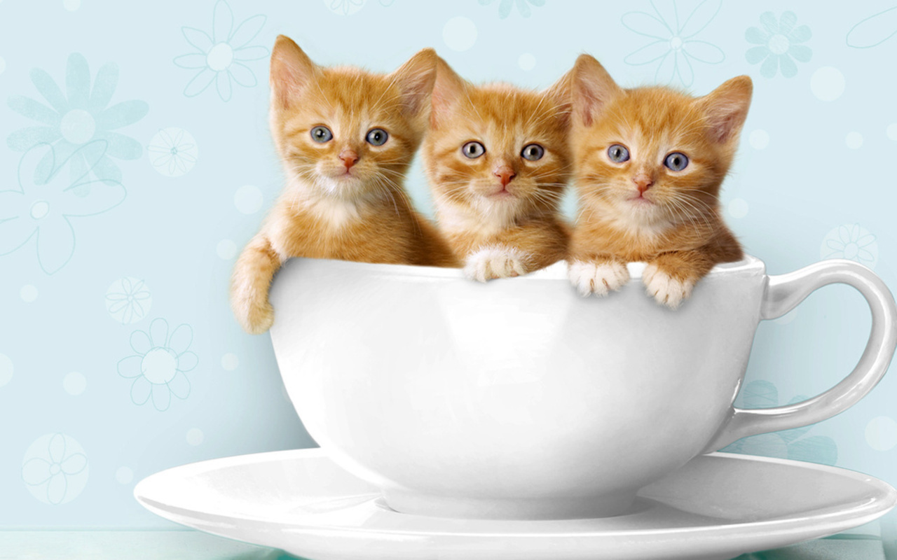 cute kitten videos youtube