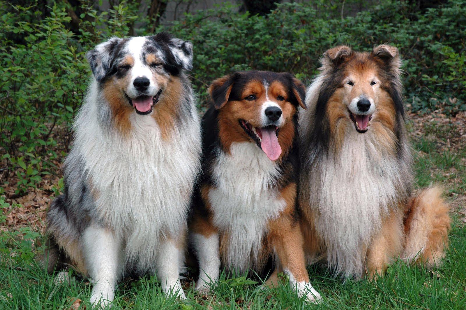 Animales que son mascotas