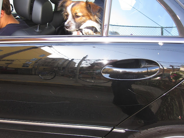Savvy+Spice+Dale+Steliga+Car+vandalism+in+San+Francisco
