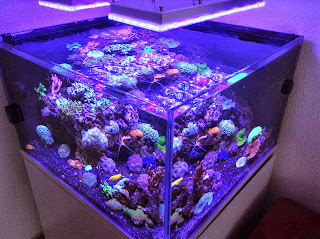 Led aquarium lighting