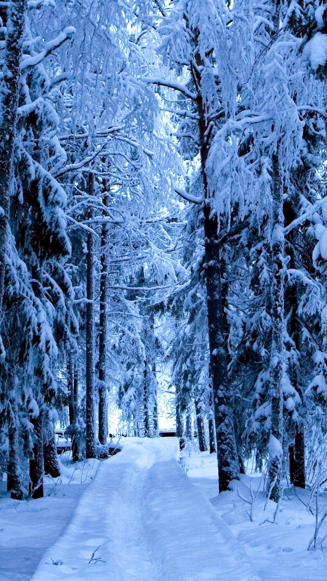 click here to download snow forest blue ice android wallpaper resolution 1080x1920 pixel