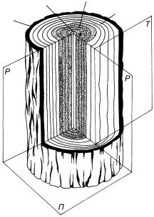 Цилиндрический канал древесины