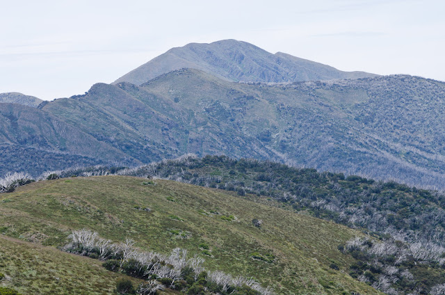 Mt Feathertop and Diamantina Spur