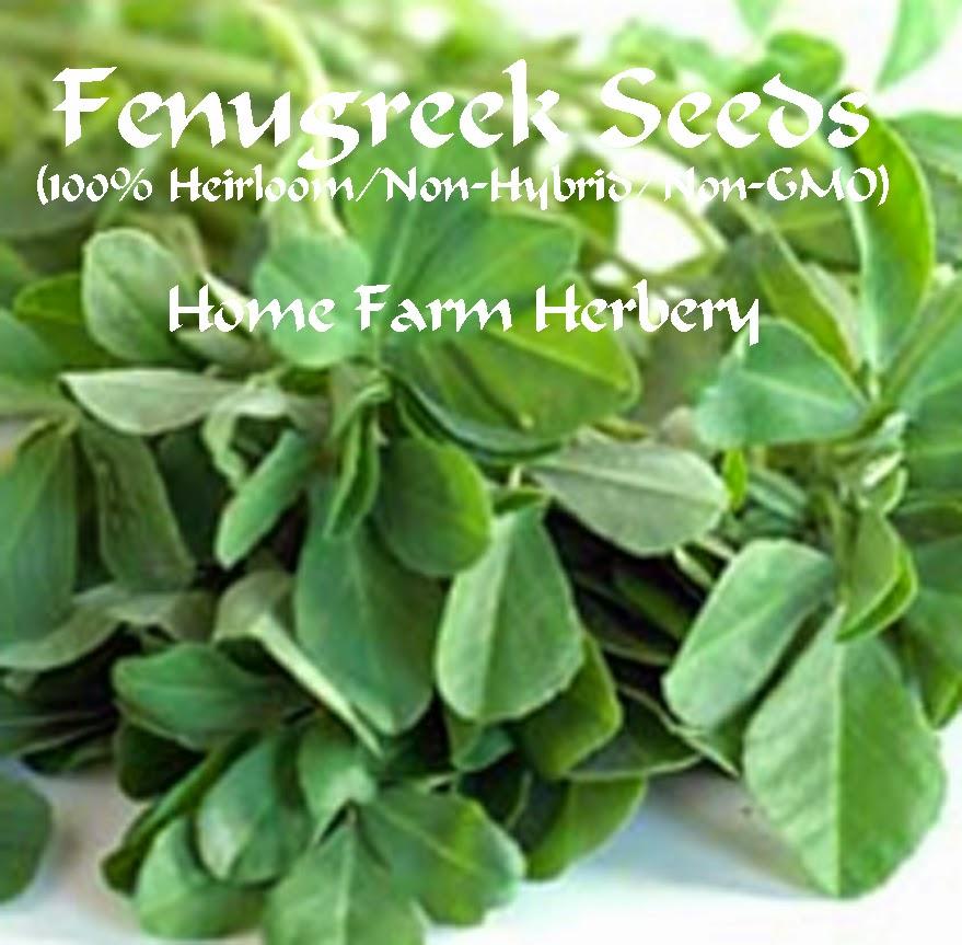 Fenugreek Heirloom Herb Seeds For Sale Order Now