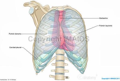 Anatomía Radiológica TORAX: 2013
