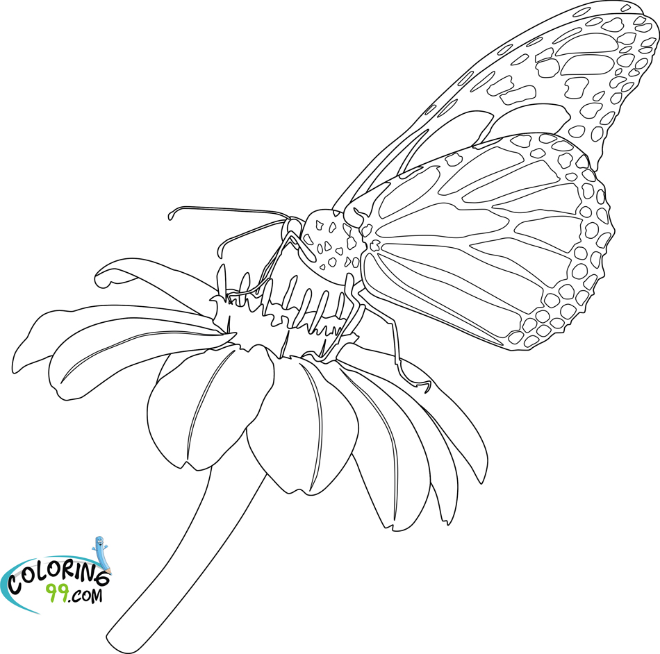 butterfly coloring pages minister coloring