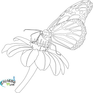 butterfly and flowe coloring pages for kids