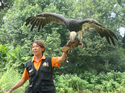Jurong Bird Park - Kings of the Skies Show Photo 8