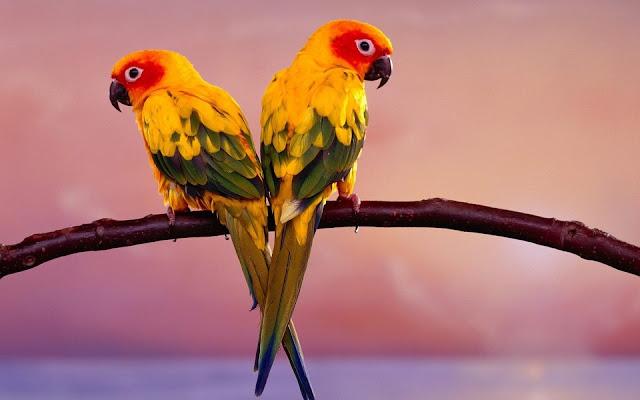 Cute Parrot Pair