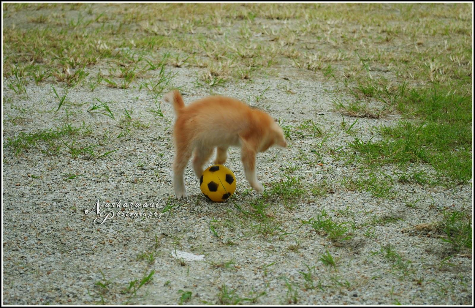 Gambar aksi pemain bola sepak malaysia