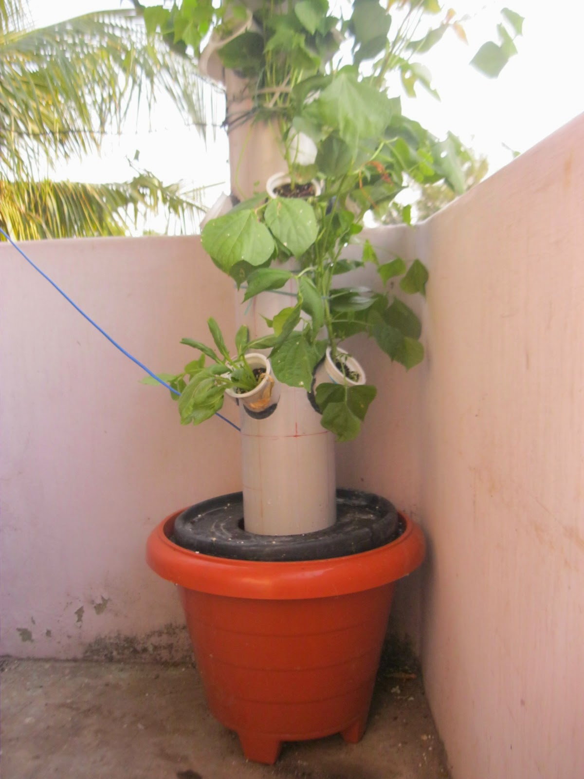 Chennai Hydroponics Aeroponic Tower Garden Growing System