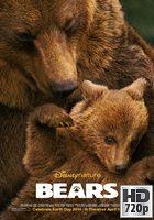 Bears (2014) BRrip 720p Latino-Ingles