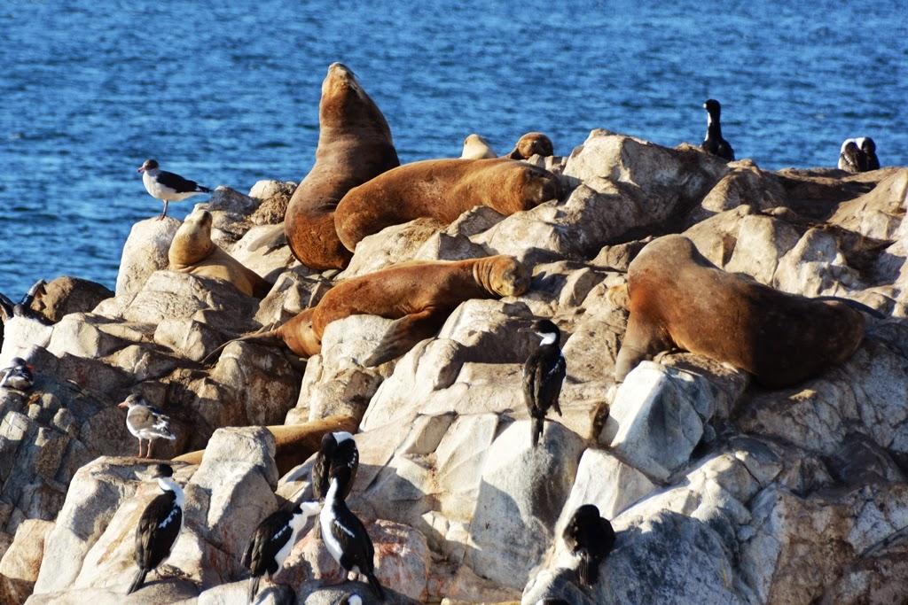 Beagle Canal Ushuaia sea lions