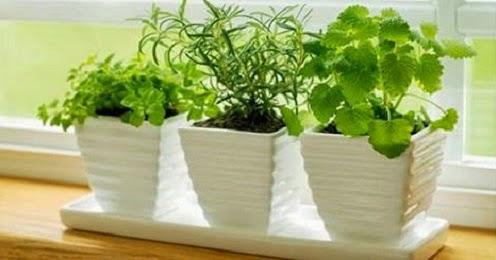 Tu salud 10 plantas que atraen energ as positivas - Energias positivas y negativas ...