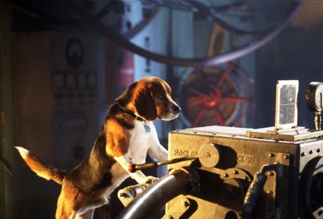 Hình ảnh phim Cuộc Chiến Chó Mèo