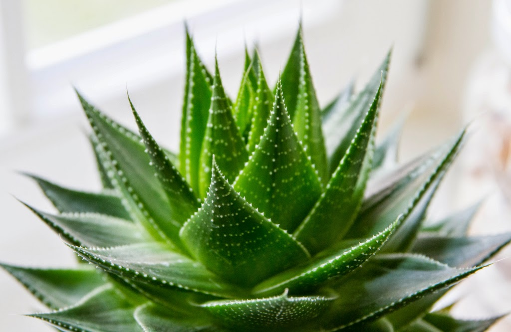 Benefits And Nutrition Of Aloe Vera For Health