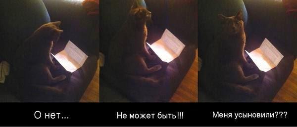 Кот узнал правду