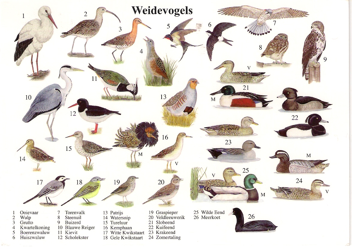 Names of Birds List of Birds by Common Name