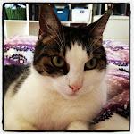 Vilma's kat