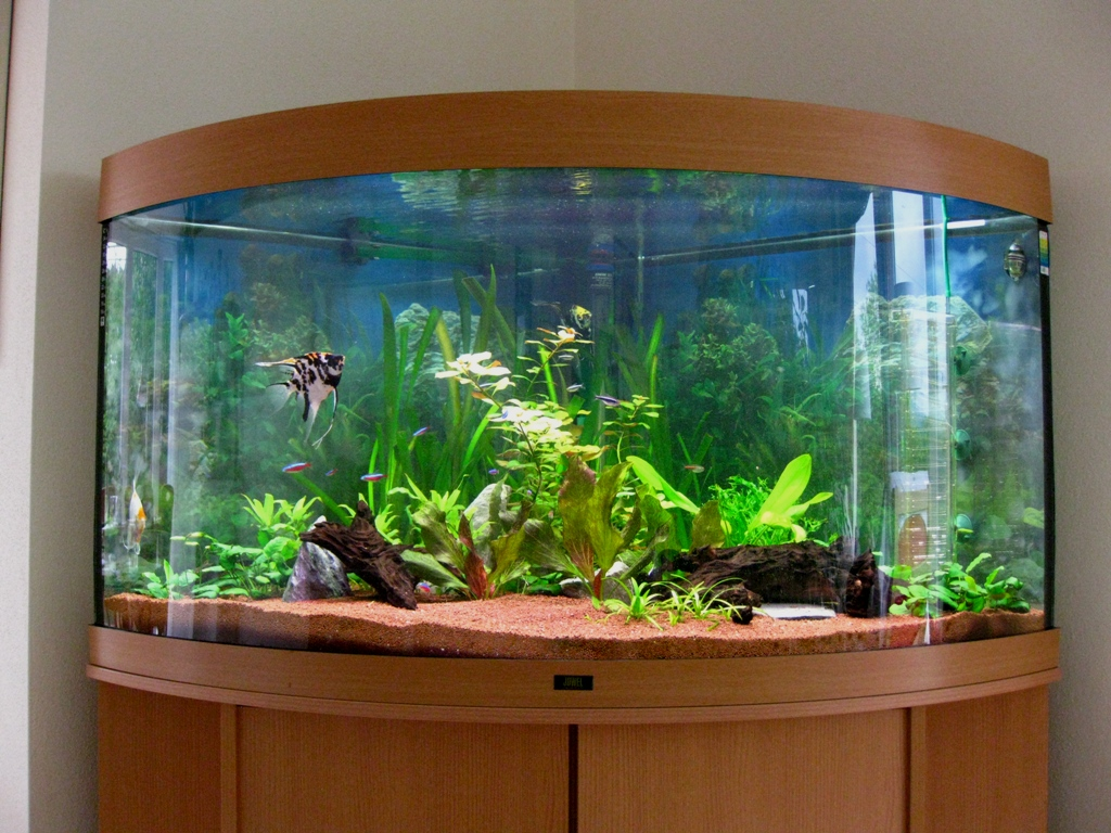 Exclusive aquarium design for Aquarium design