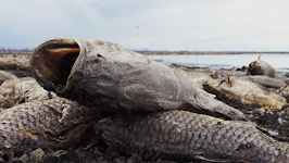 Untold millions of tons of wildlife died in 2019