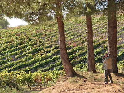 Esteban Capdevila en las tierras de Bodegas comenge en la vendimia de 2012. Blog Esteban Capdevila
