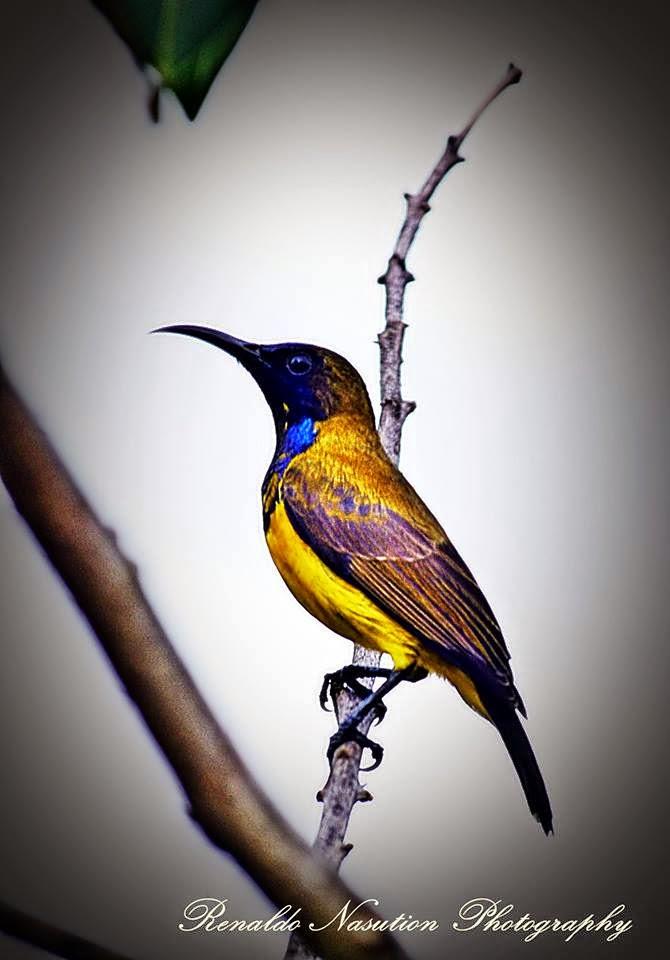 An Little Bird