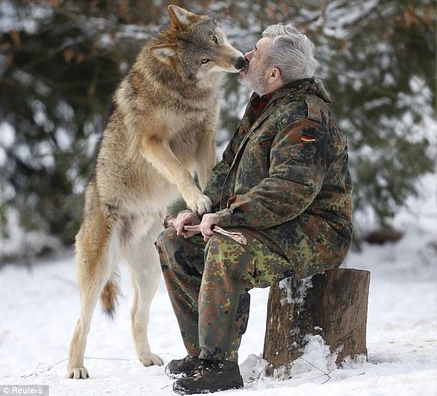 werner freund wolf research paper