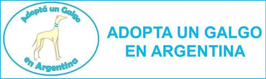 Adoptà un galgo en Argentina