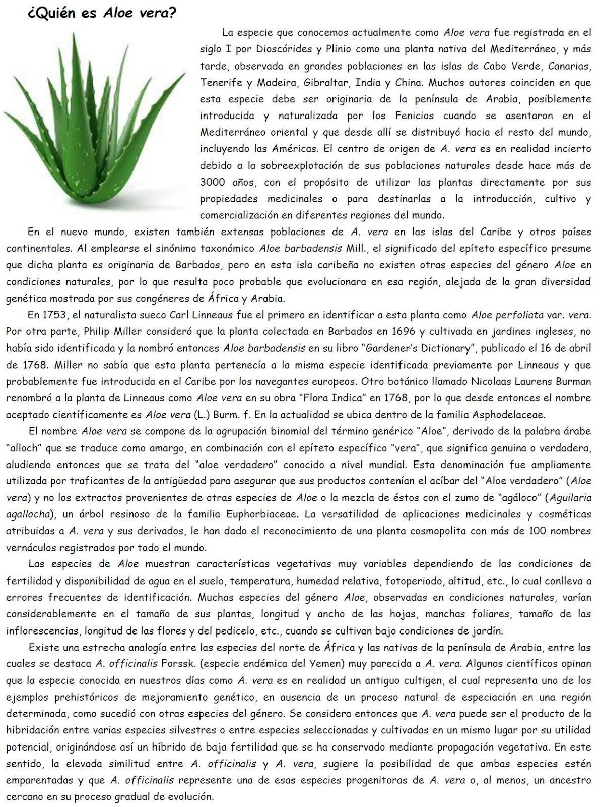 ¿Quién es Aloe vera?