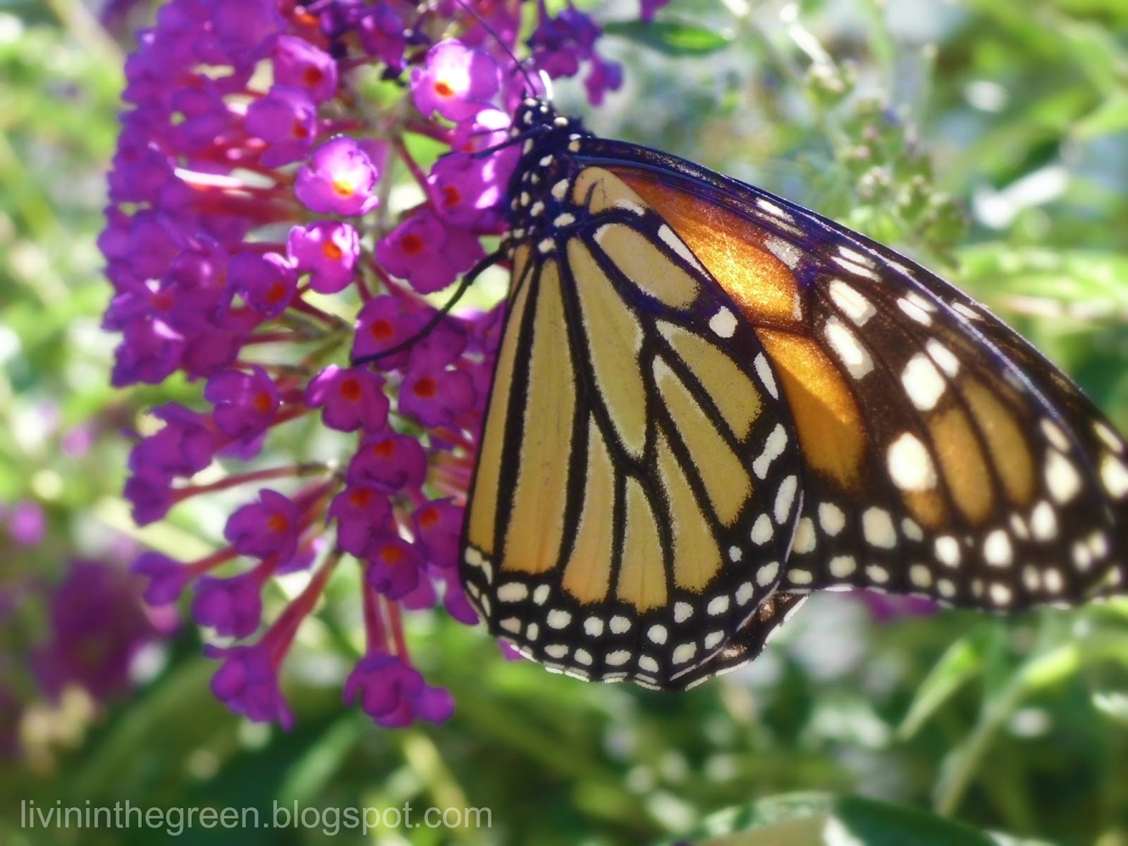 Jardines para la Vida Silvestre | El Jardín Botánico de Santa Bárbara