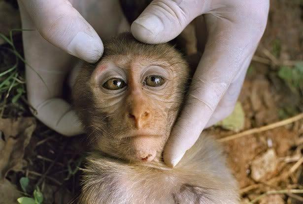 No sperimentazione sugli animali
