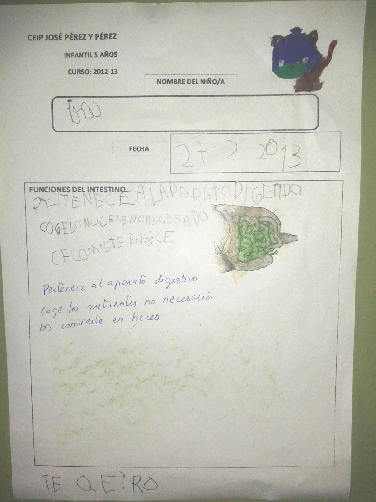 Proyectos Educación Infantil: ANATOMÍA DEL GATO