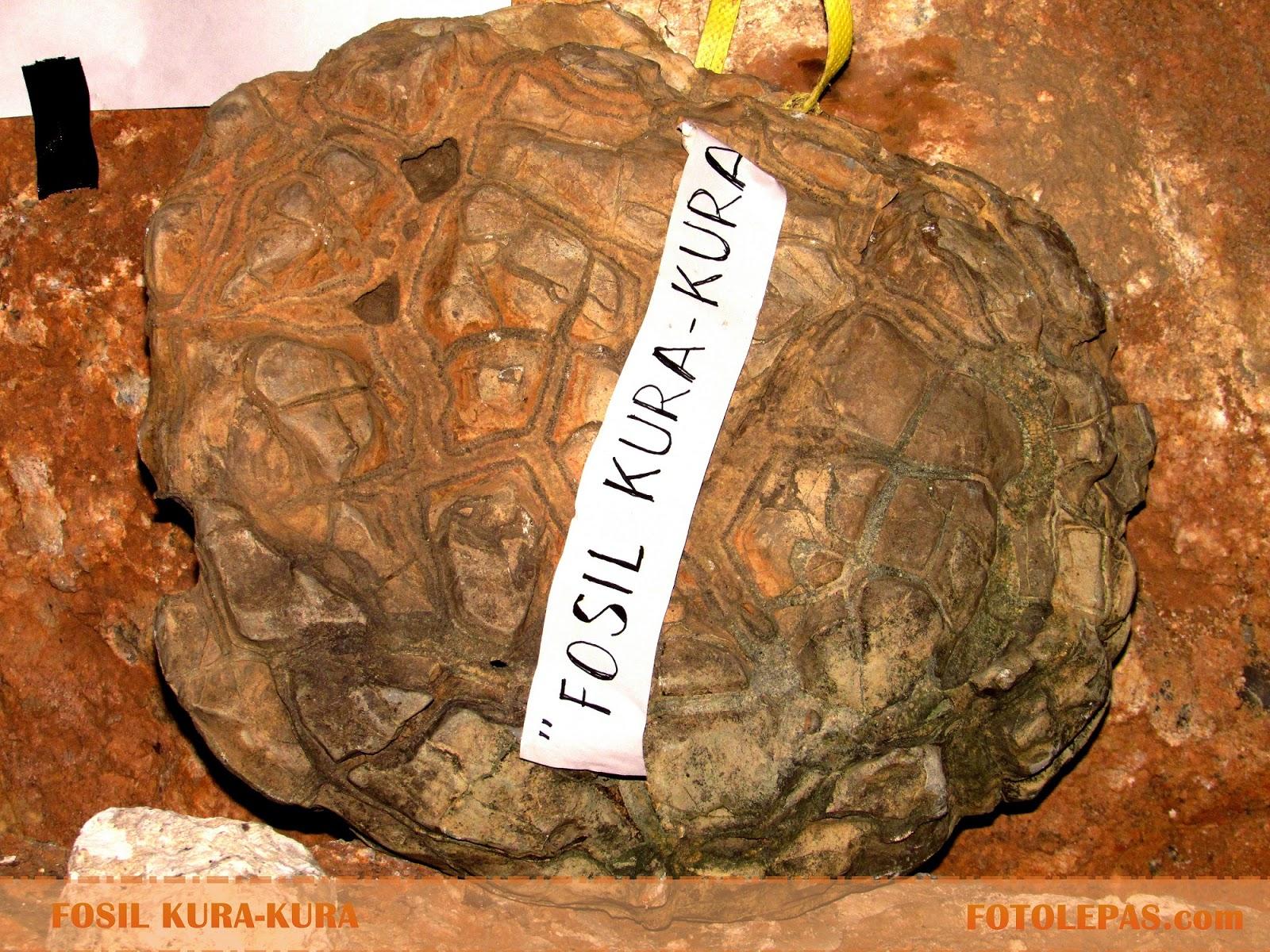 Batu Akik Fosil Kura-Kura Purba