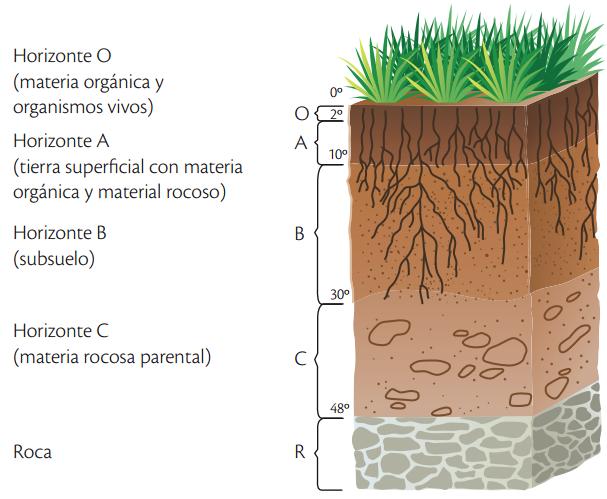 Primer grado de secundaria estatal el suelo y sus for El suelo y sus capas