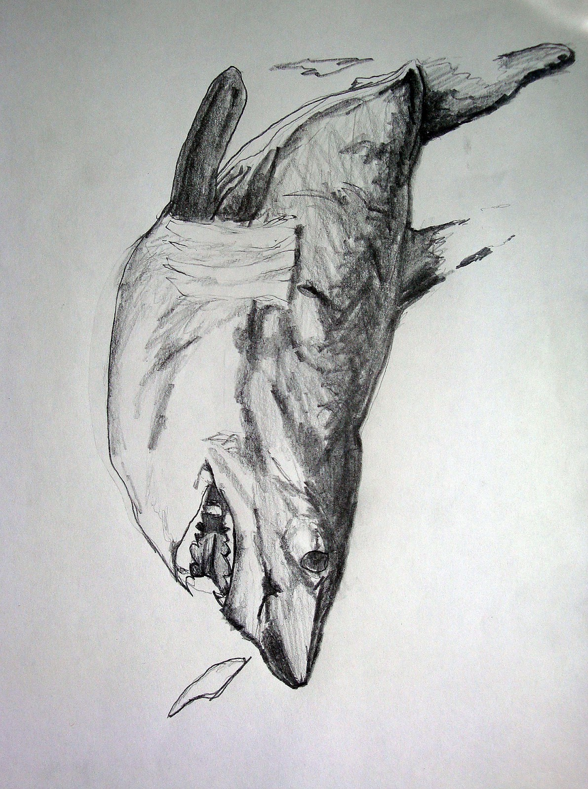 Dead Shark Drawing I've Been Doing Some Drawing