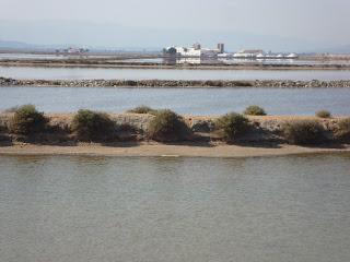 Salt Mining - Delta de L'Ebre - Punta de La Banya - Sant Carles de La Rápita
